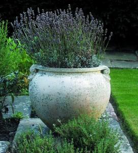 A pot of typical Compton design