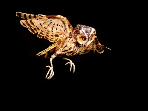 Elizabeth Jardine's sculpture 'Owl', wingspan 61cm
