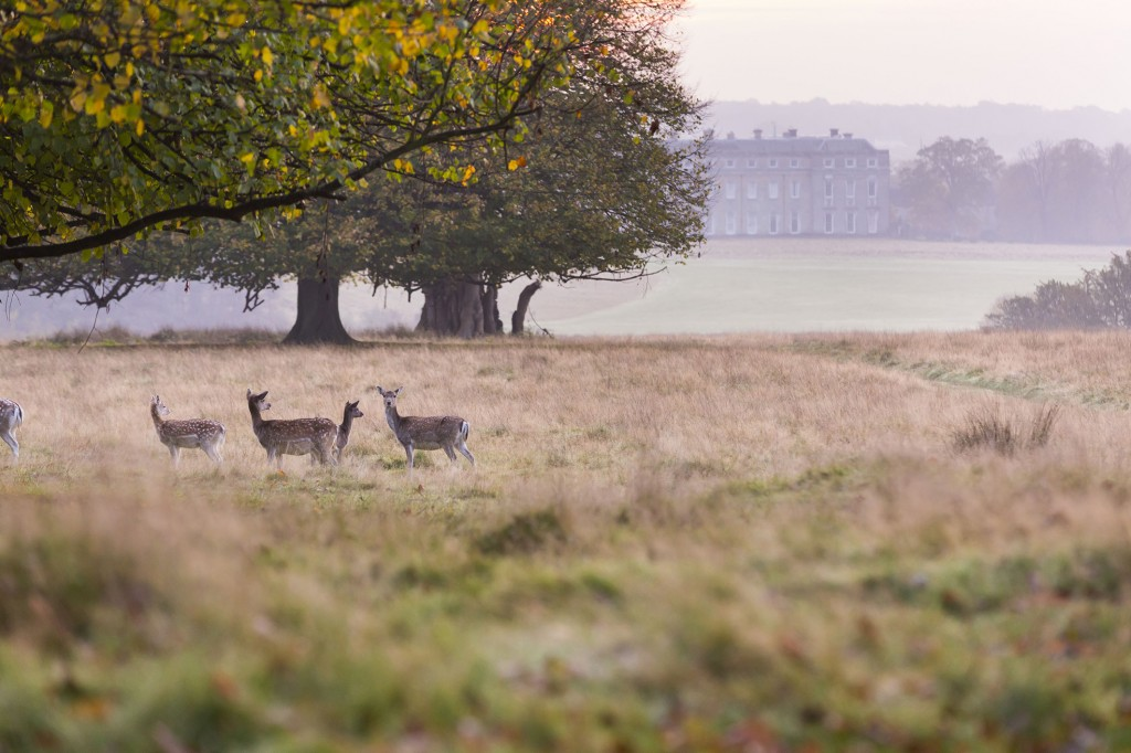 Petworth House and Park © National Trust Images, Chris Lacey