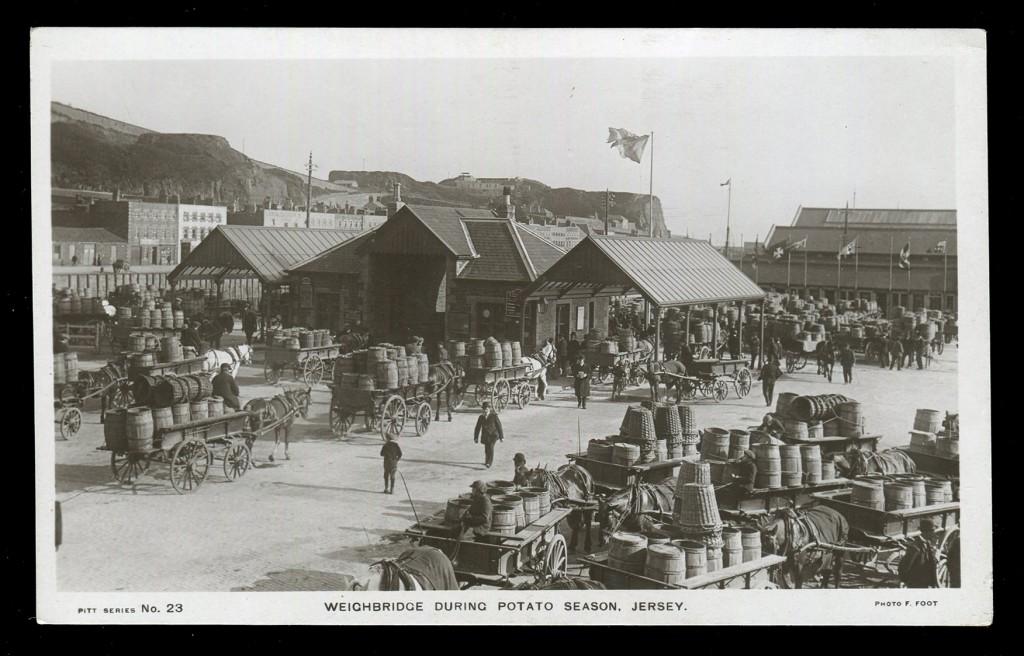Postcard titled 'Weighbridge during Potato Season, Jersey'