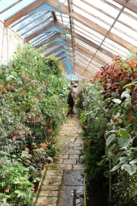 The Greenhouse at Parham being tended by Peta and Henry