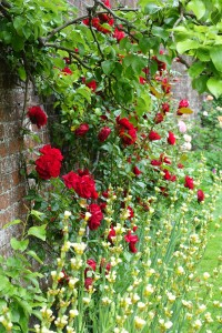 The Rose Garden at St Mary's, Bramber