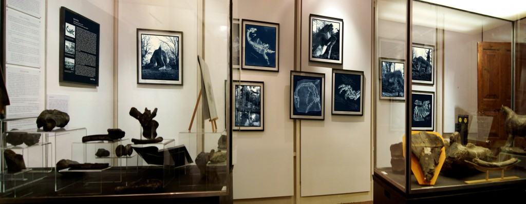 Adrien Sina's work displayed alongside the displays of dinosaur bones!