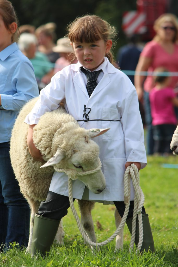 Lamb handling classes at the show