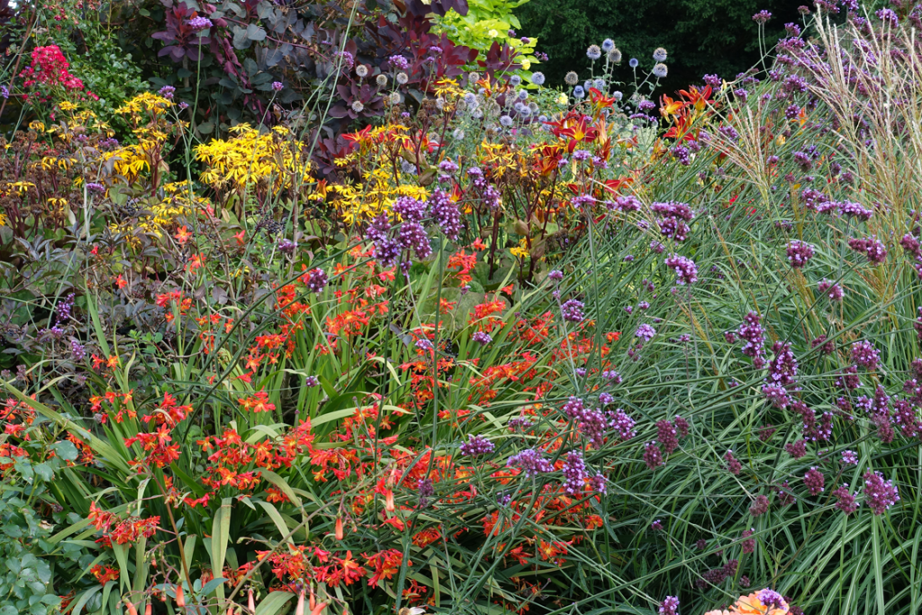 The vibrant Mid-Summer Border at Borde Hill Garden