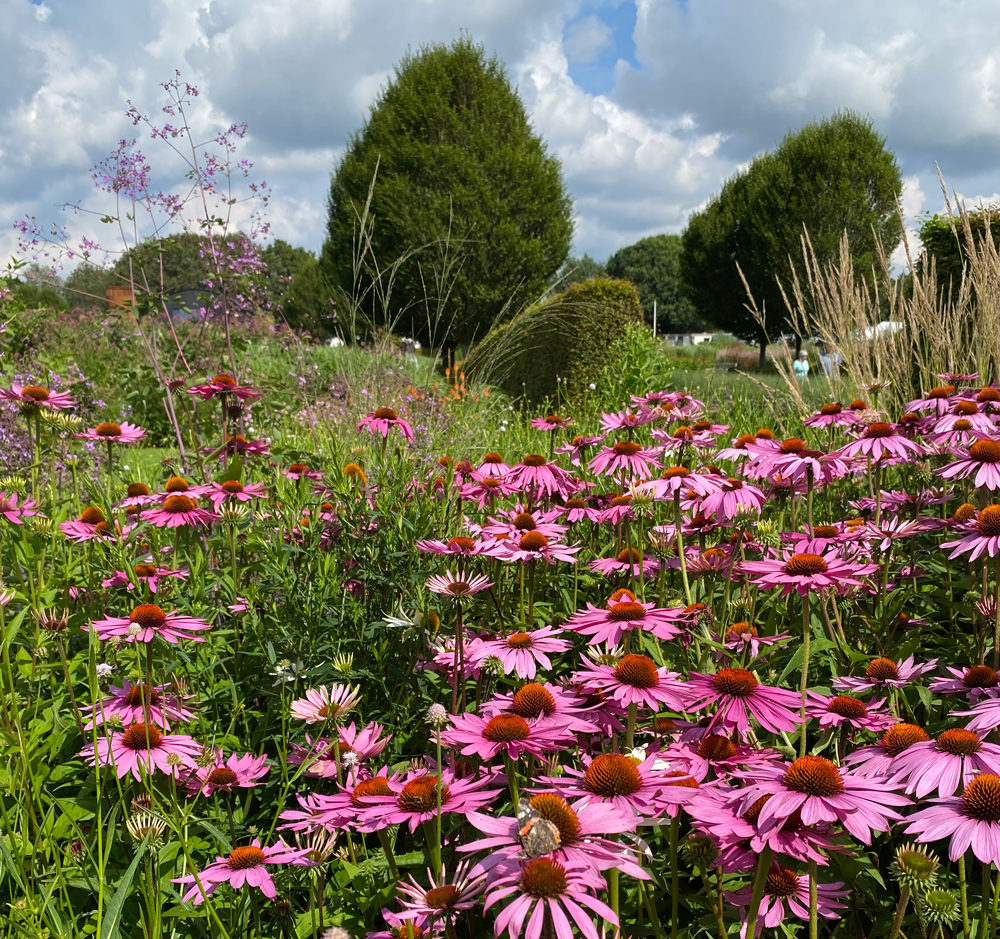 The Sussex Prairie Garden